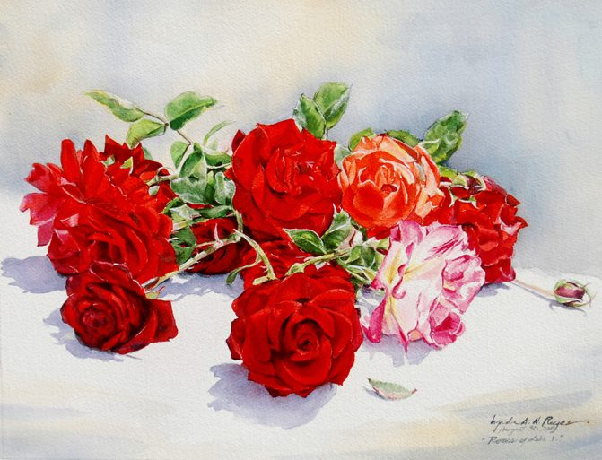 multiple red roses on a white table