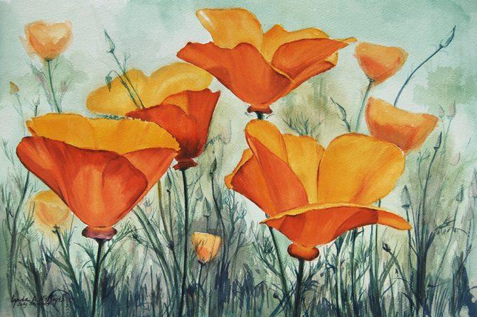 close up still life of orange california poppies